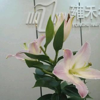 郑州雍禾植发医院