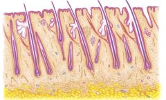 脂溢性脱发的主要症状